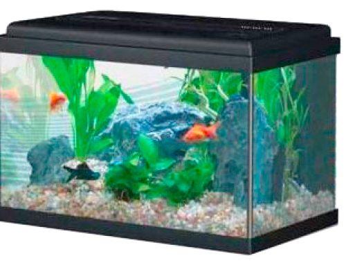 Todo acerca de la silicona para acuarios